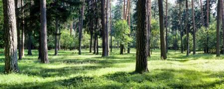 Эко-Курорт. Продажа элитных участков и домов СПб